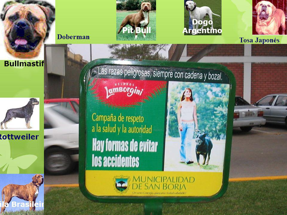 Pit Bull Dogo Argentino Doberman Tosa Japonés Bullmastiff Rottweiler