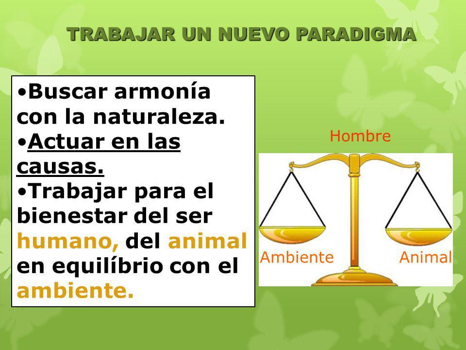Buscar armonía con la naturaleza. Actuar en las causas.