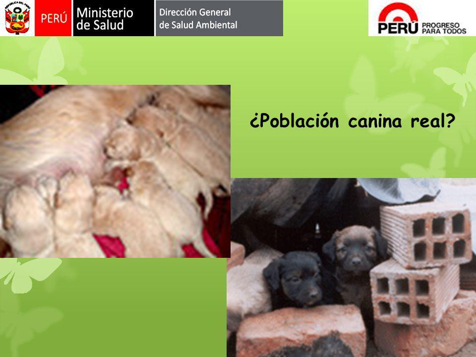 ¿Población canina real