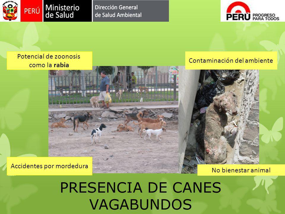 PRESENCIA DE CANES VAGABUNDOS