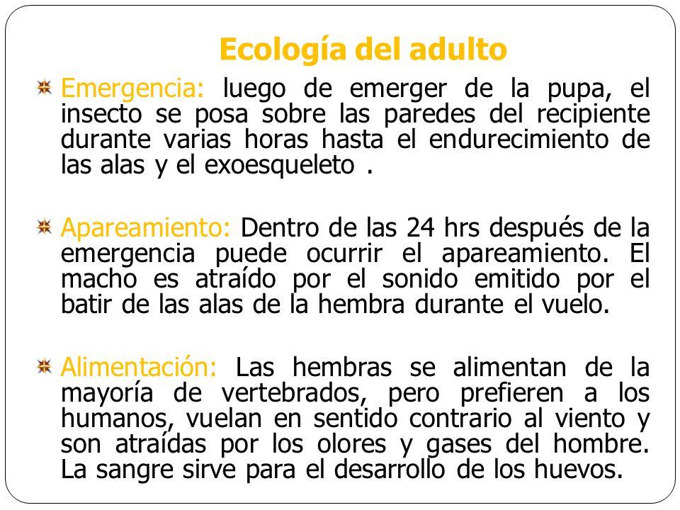 Ecología del adulto
