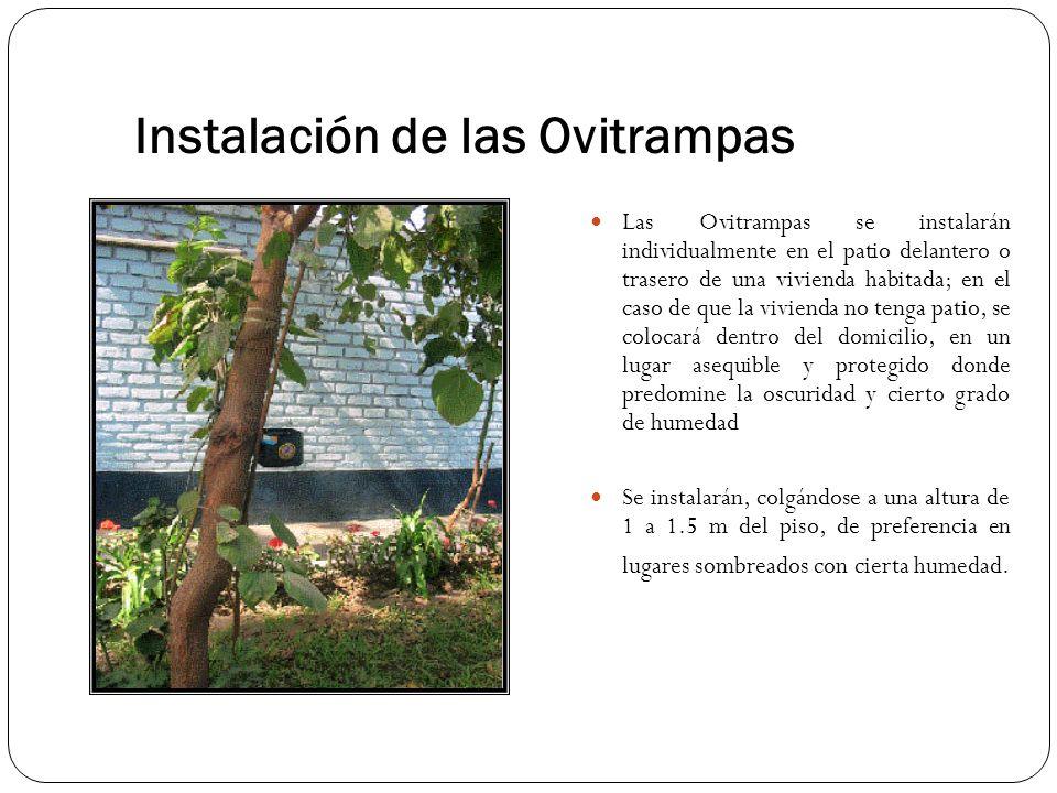 Instalación de las Ovitrampas