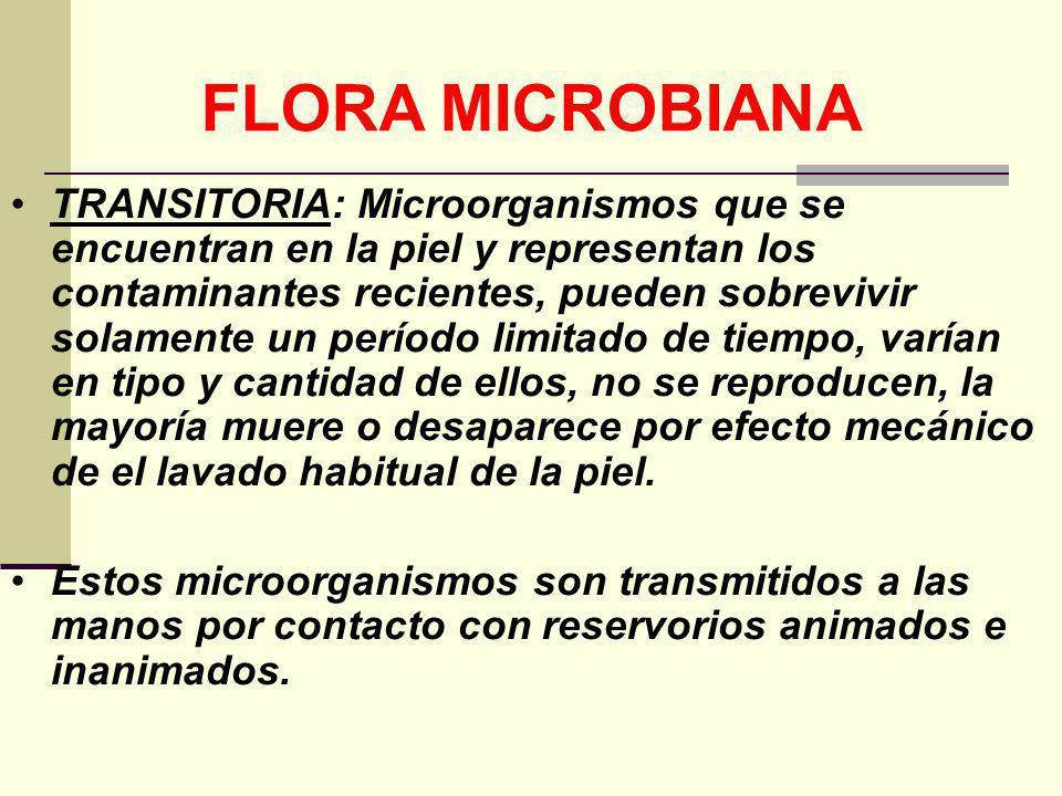 FLORA MICROBIANA