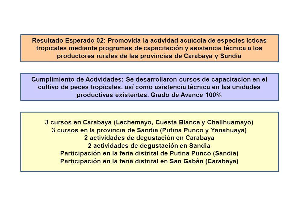 3 cursos en Carabaya (Lechemayo, Cuesta Blanca y Challhuamayo)