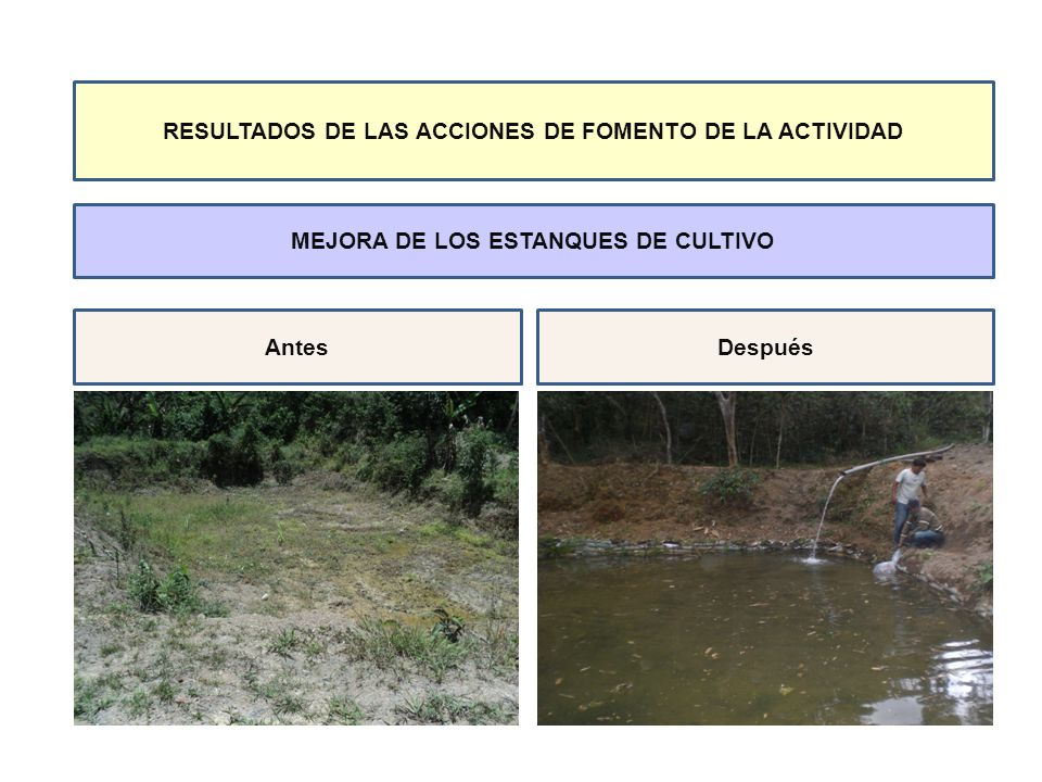 RESULTADOS DE LAS ACCIONES DE FOMENTO DE LA ACTIVIDAD