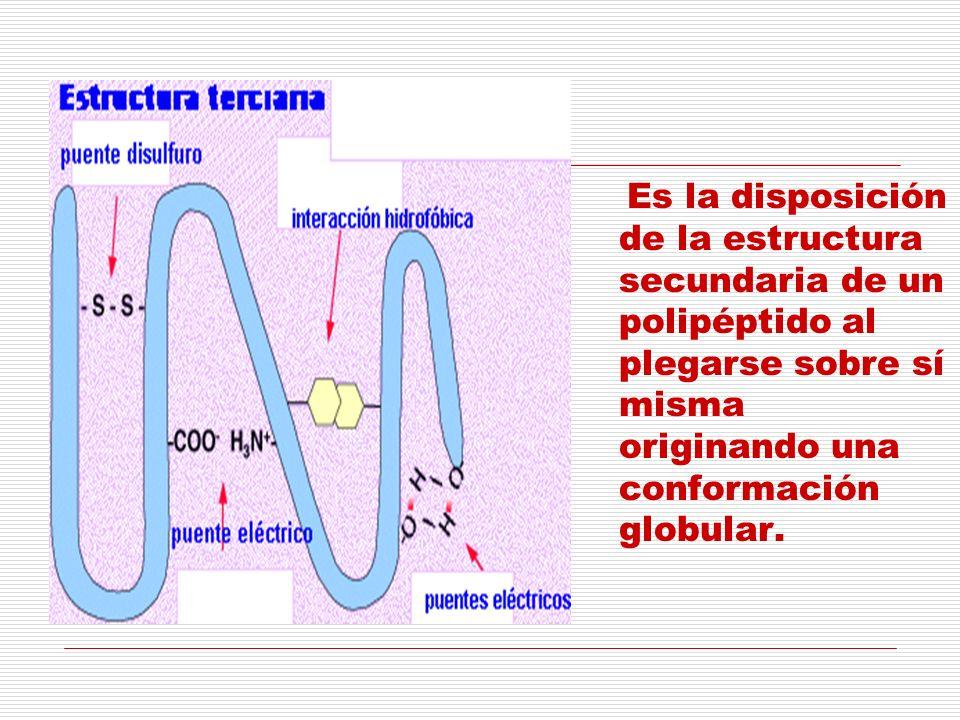 Es la disposición de la estructura secundaria de un polipéptido al plegarse sobre sí misma originando una conformación globular.