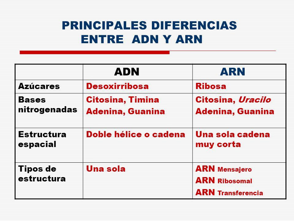 PRINCIPALES DIFERENCIAS ENTRE ADN Y ARN