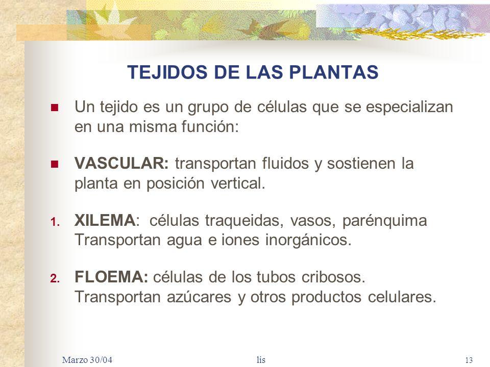 TEJIDOS DE LAS PLANTAS Un tejido es un grupo de células que se especializan en una misma función: