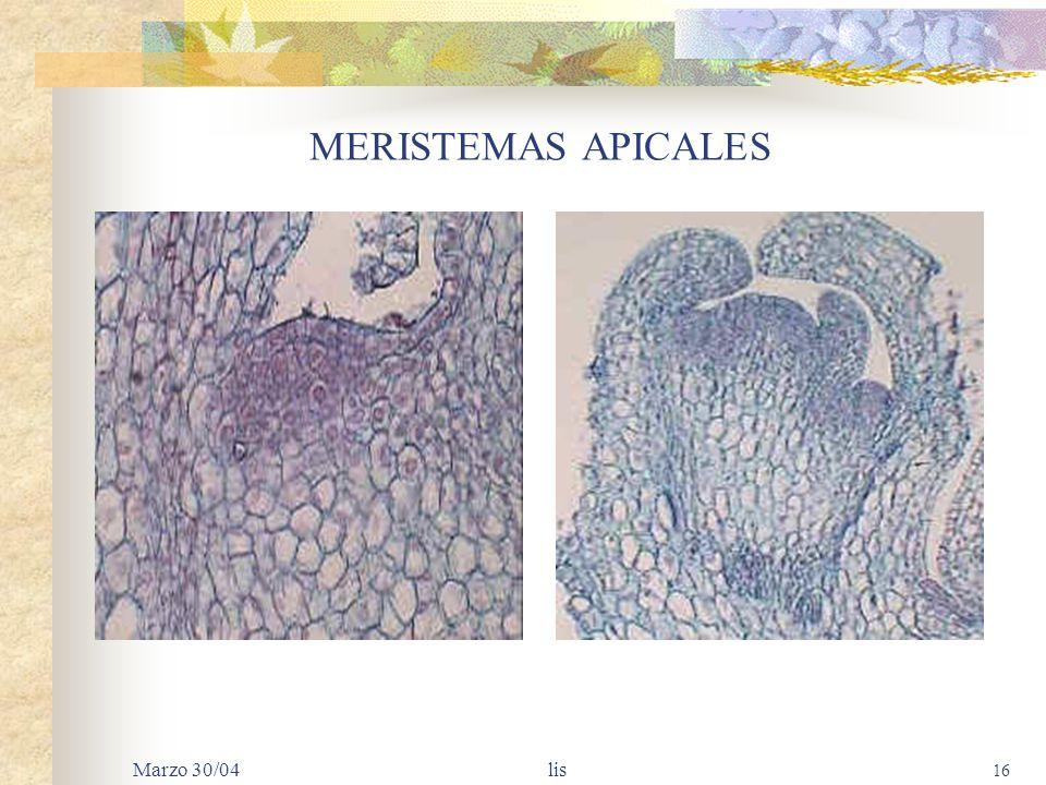 MERISTEMAS APICALES Marzo 30/04 lis
