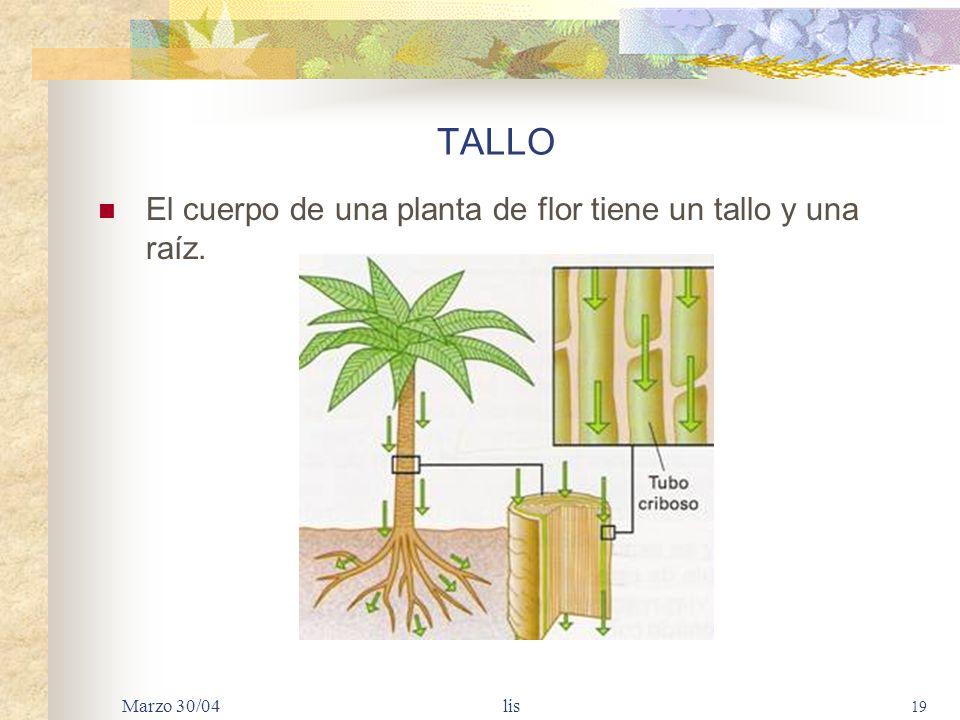 TALLO El cuerpo de una planta de flor tiene un tallo y una raíz.