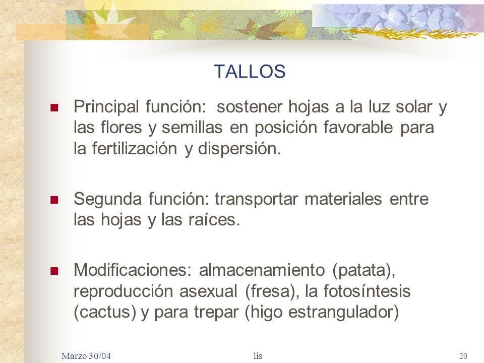 TALLOS Principal función: sostener hojas a la luz solar y las flores y semillas en posición favorable para la fertilización y dispersión.