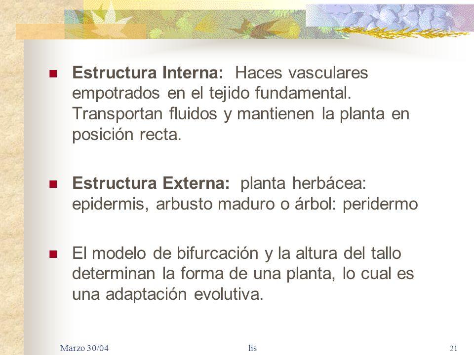 Estructura Interna: Haces vasculares empotrados en el tejido fundamental. Transportan fluidos y mantienen la planta en posición recta.