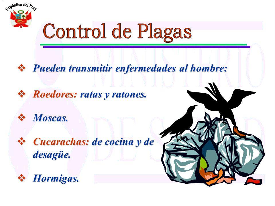 Control de Plagas Pueden transmitir enfermedades al hombre: