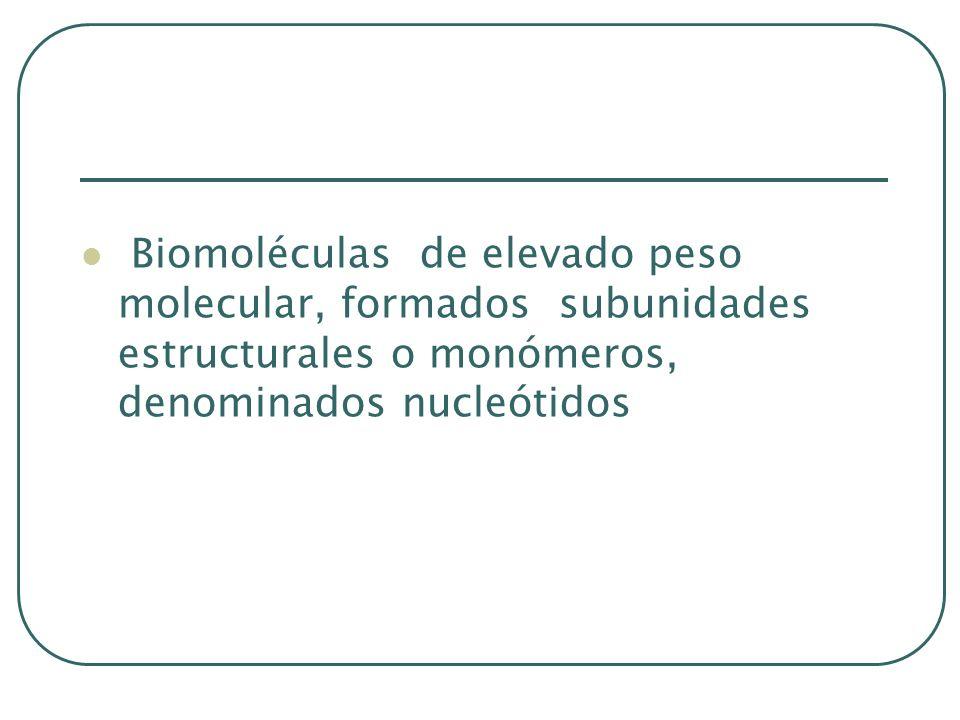 Biomoléculas de elevado peso molecular, formados subunidades estructurales o monómeros, denominados nucleótidos