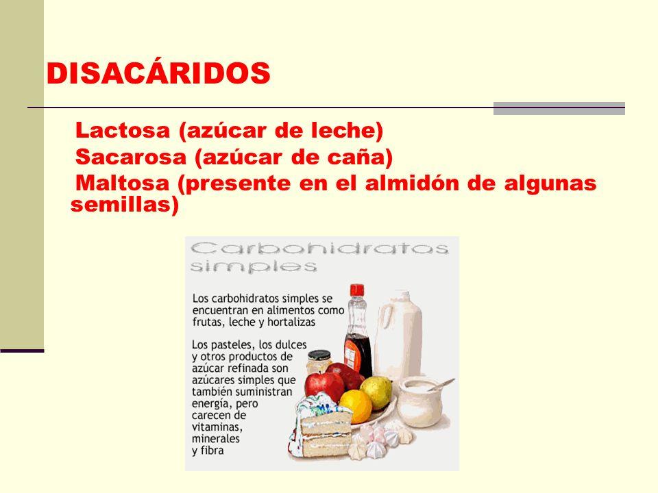 DISACÁRIDOS Lactosa (azúcar de leche) Sacarosa (azúcar de caña)