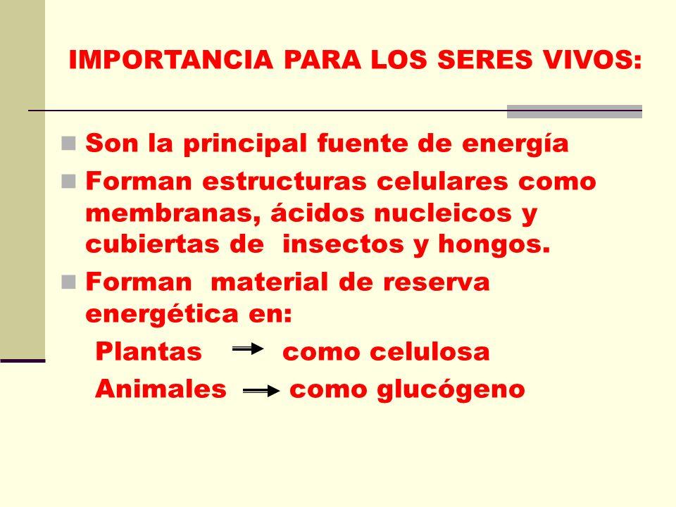 IMPORTANCIA PARA LOS SERES VIVOS: