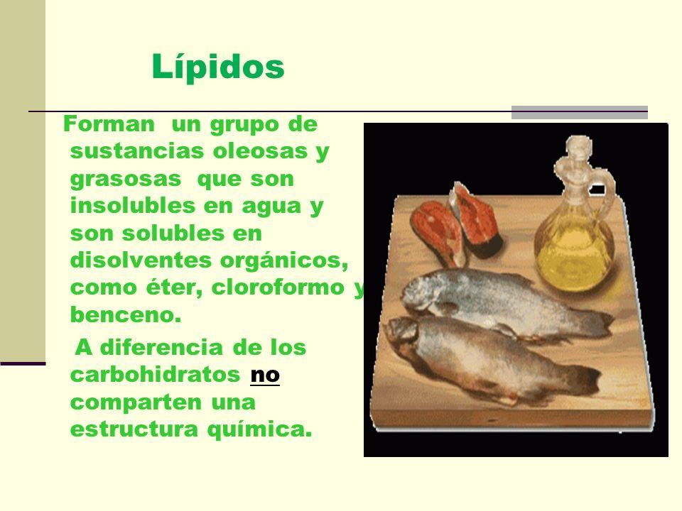 Lípidos