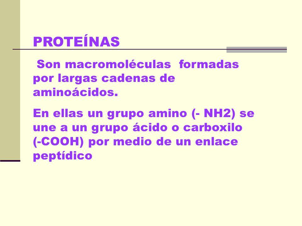 PROTEÍNAS Son macromoléculas formadas por largas cadenas de aminoácidos.