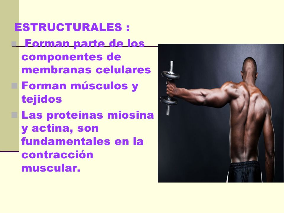 Forman músculos y tejidos