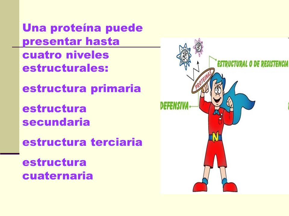 Una proteína puede presentar hasta cuatro niveles estructurales:
