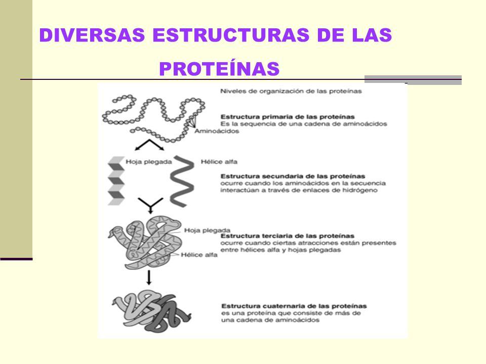 DIVERSAS ESTRUCTURAS DE LAS