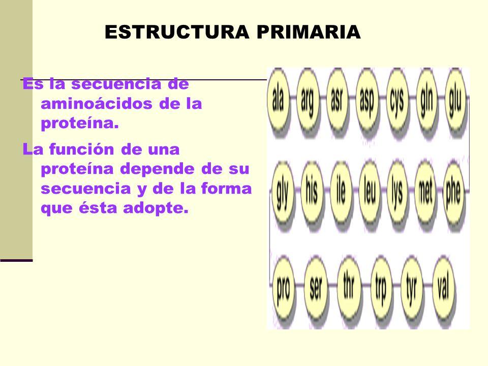 ESTRUCTURA PRIMARIA Es la secuencia de aminoácidos de la proteína.