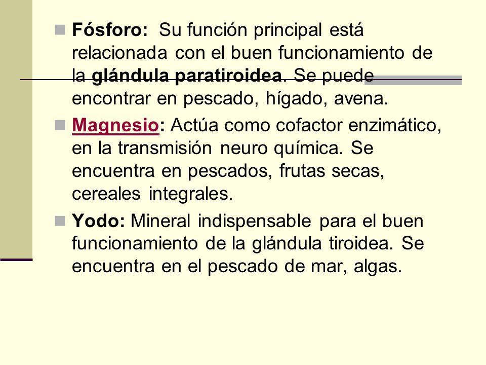 Fósforo: Su función principal está relacionada con el buen funcionamiento de la glándula paratiroidea. Se puede encontrar en pescado, hígado, avena.