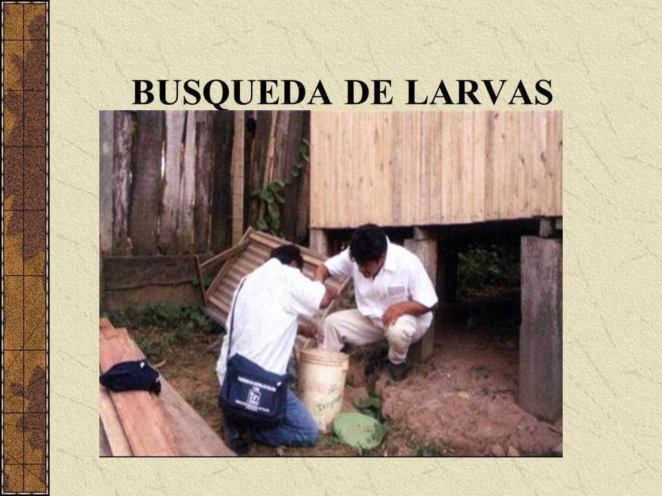 BUSQUEDA DE LARVAS
