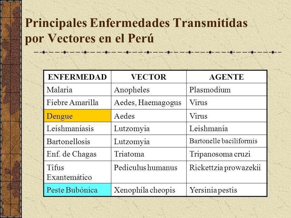 Principales Enfermedades Transmitidas por Vectores en el Perú