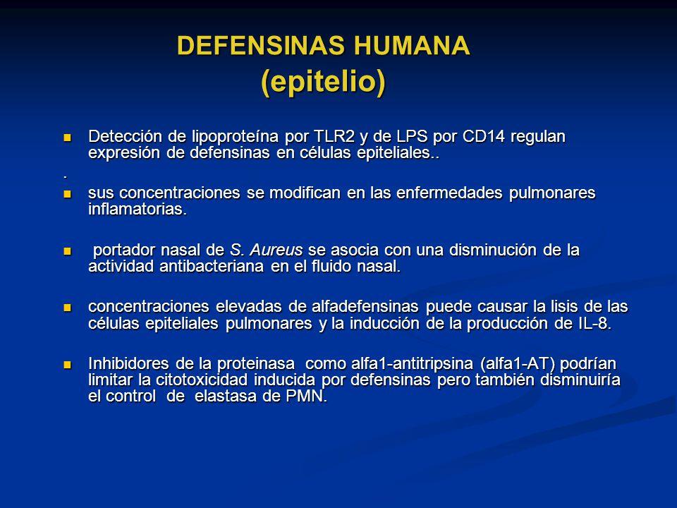 DEFENSINAS HUMANA (epitelio)