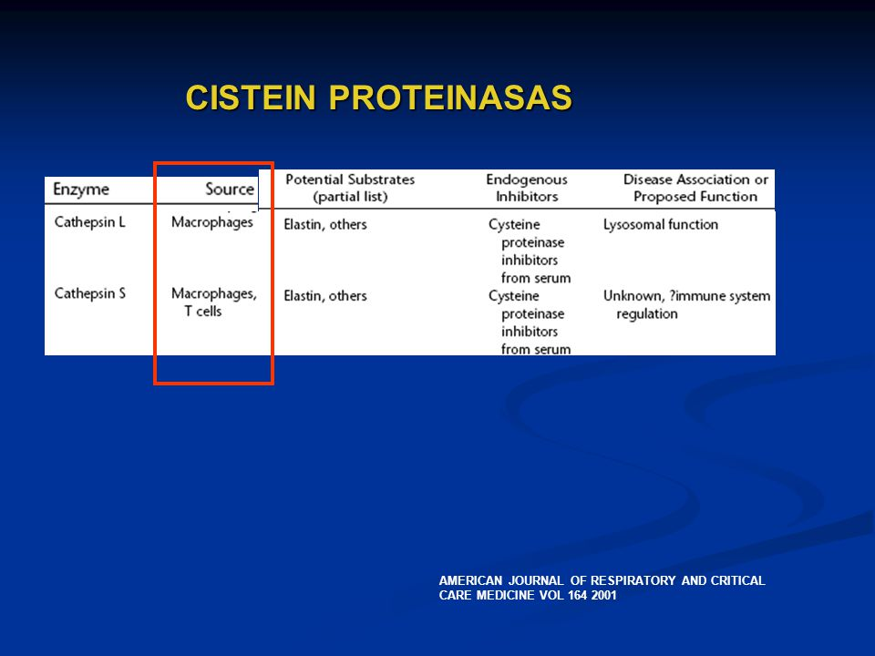 CISTEIN PROTEINASAS AMERICAN JOURNAL OF RESPIRATORY AND CRITICAL