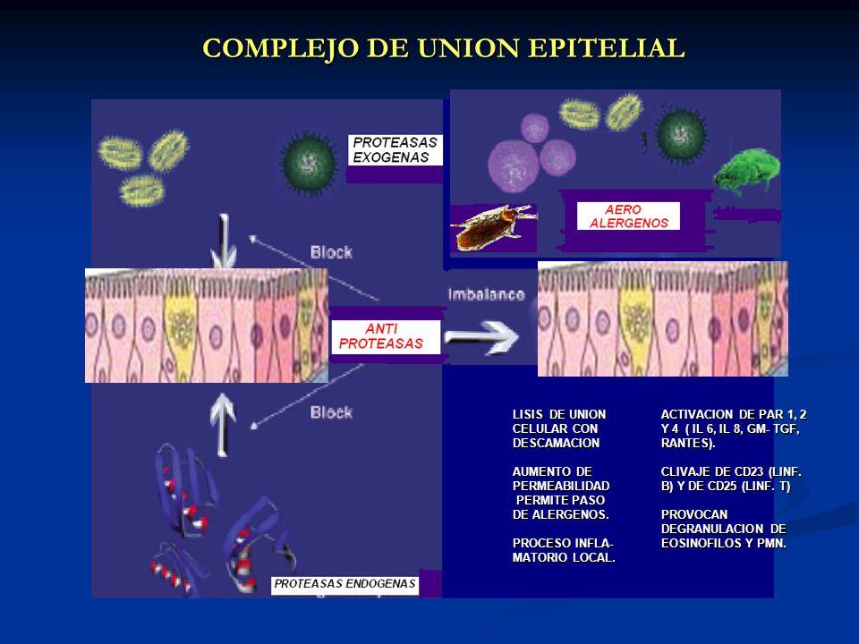 COMPLEJO DE UNION EPITELIAL