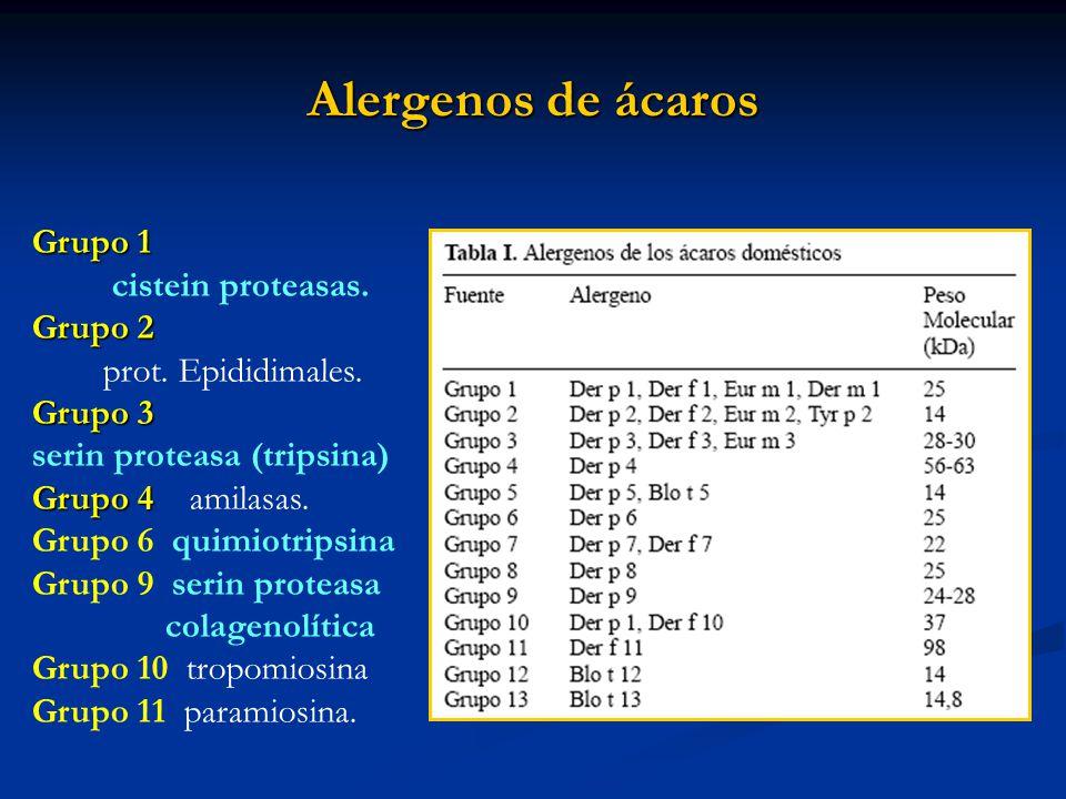 Alergenos de ácaros Grupo 1 cistein proteasas. Grupo 2