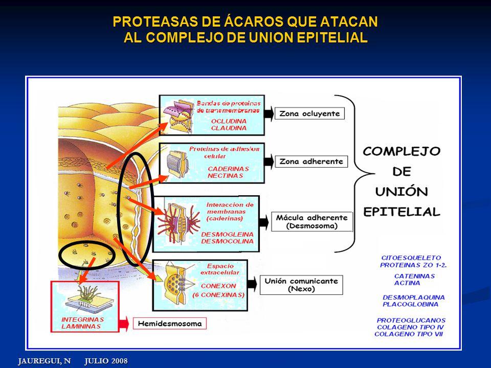 PROTEASAS DE ÁCAROS QUE ATACAN AL COMPLEJO DE UNION EPITELIAL