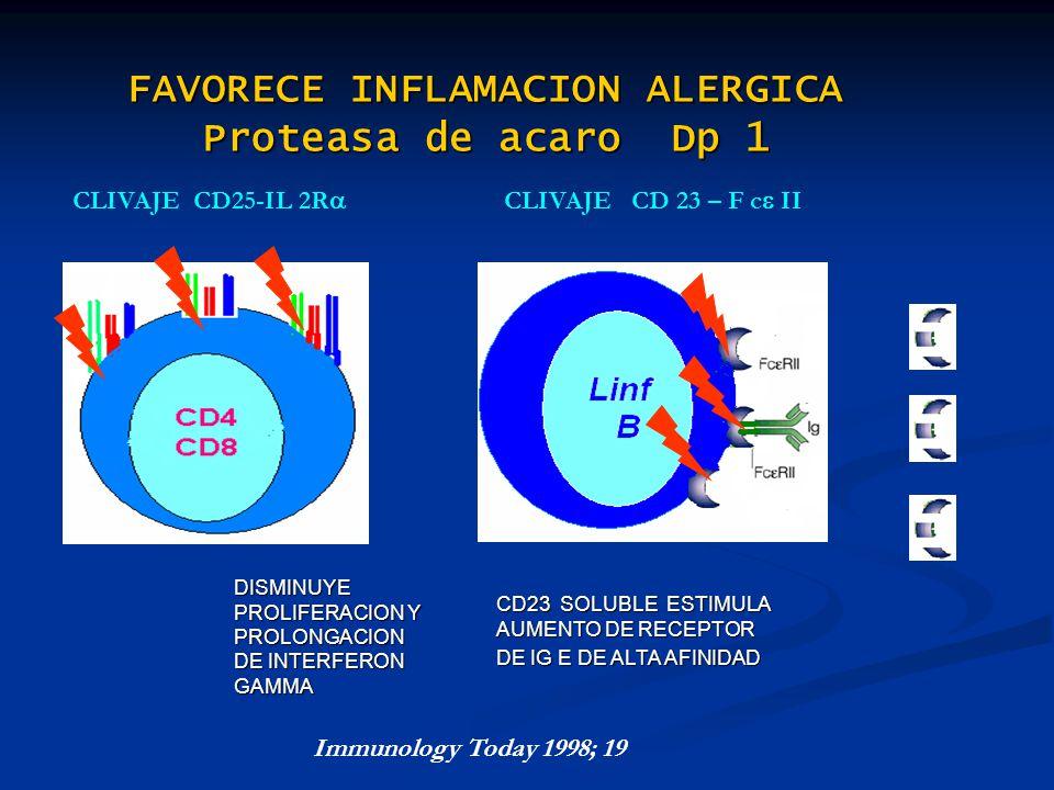 FAVORECE INFLAMACION ALERGICA Proteasa de acaro Dp 1