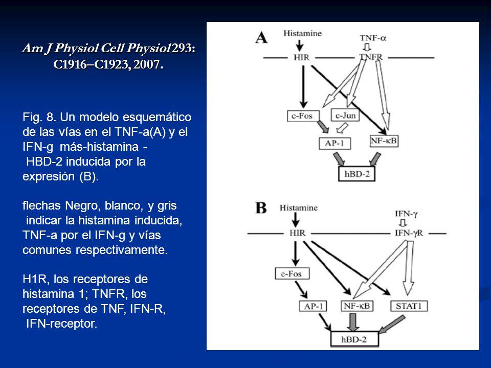 Am J Physiol Cell Physiol 293: C1916–C1923, 2007.