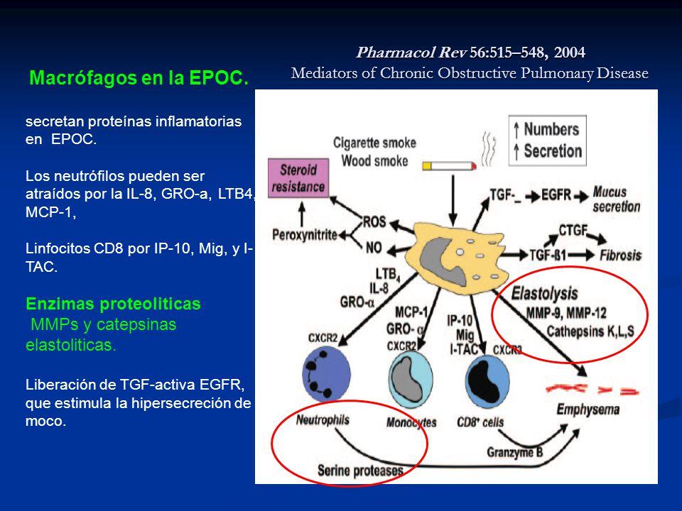 Enzimas proteoliticas MMPs y catepsinas elastoliticas.