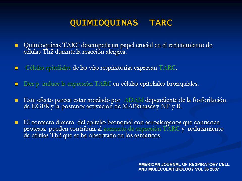 QUIMIOQUINAS TARC Quimioquinas TARC desempeña un papel crucial en el reclutamiento de células Th2 durante la reacción alérgica.