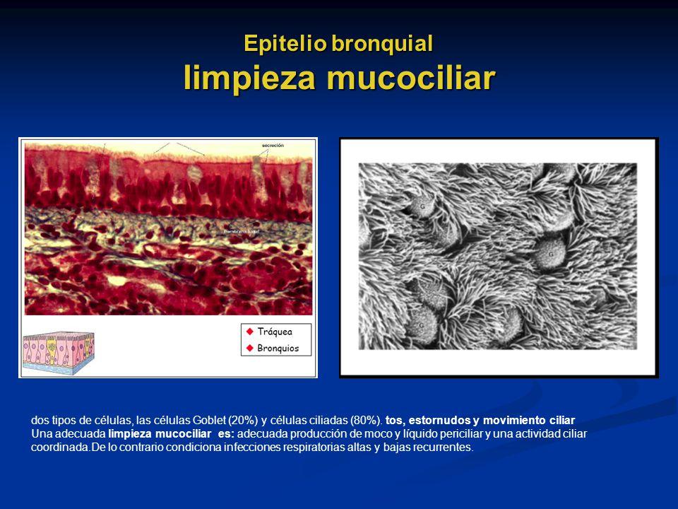 Epitelio bronquial limpieza mucociliar