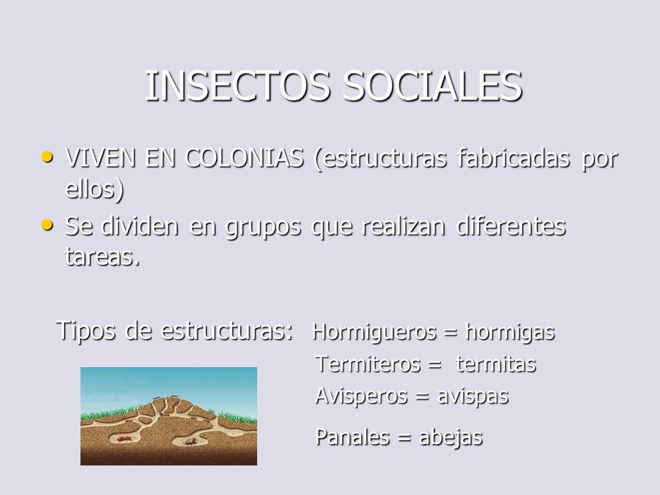 INSECTOS SOCIALES Panales = abejas