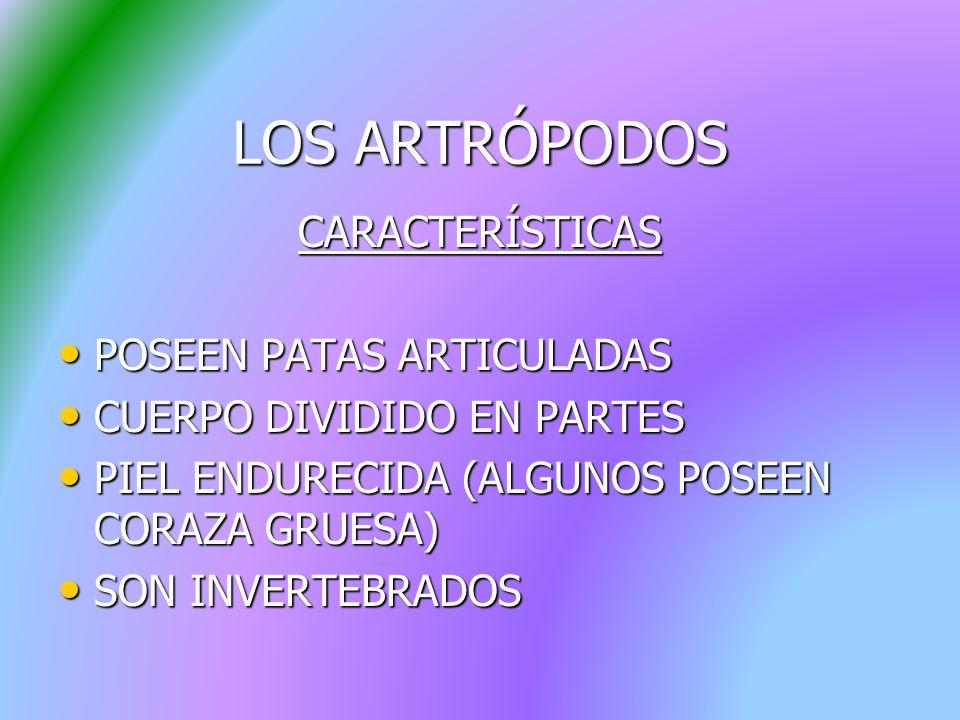 LOS ARTRÓPODOS CARACTERÍSTICAS POSEEN PATAS ARTICULADAS