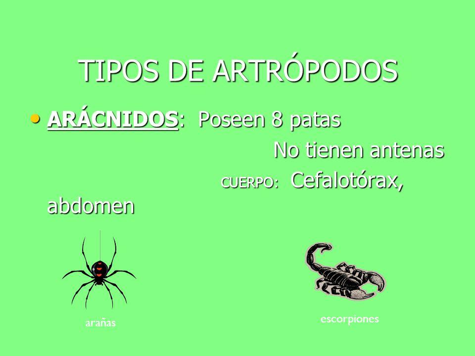 TIPOS DE ARTRÓPODOS ARÁCNIDOS: Poseen 8 patas No tienen antenas