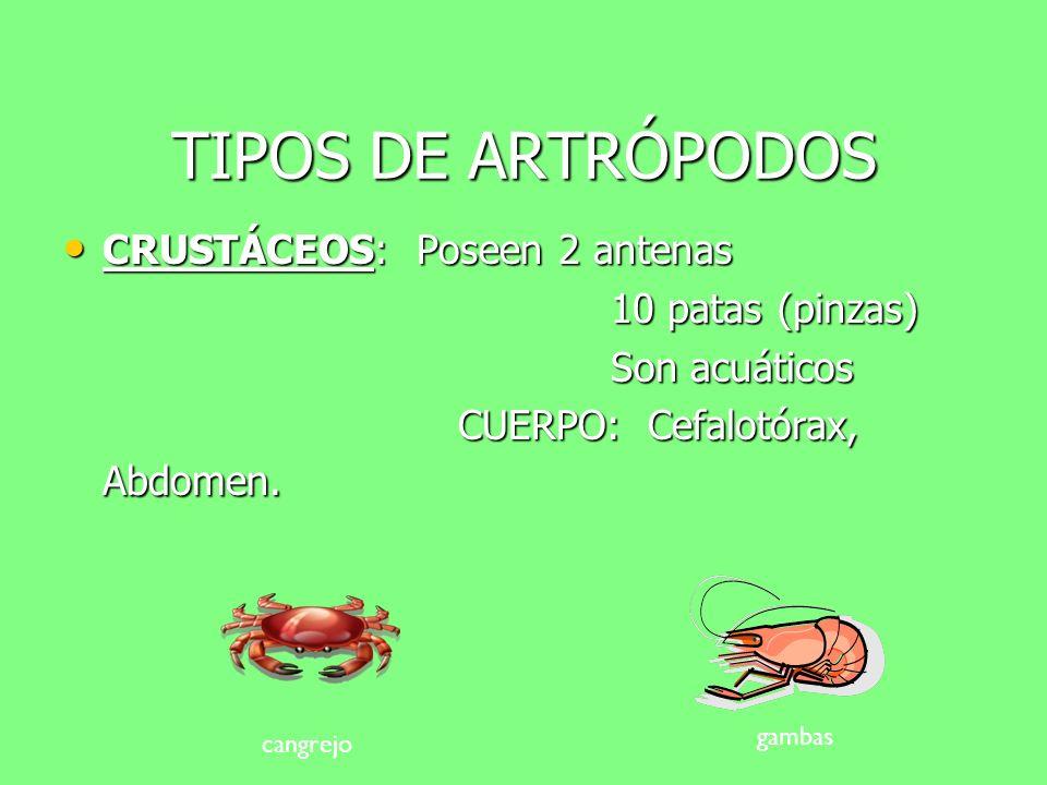TIPOS DE ARTRÓPODOS CRUSTÁCEOS: Poseen 2 antenas 10 patas (pinzas)