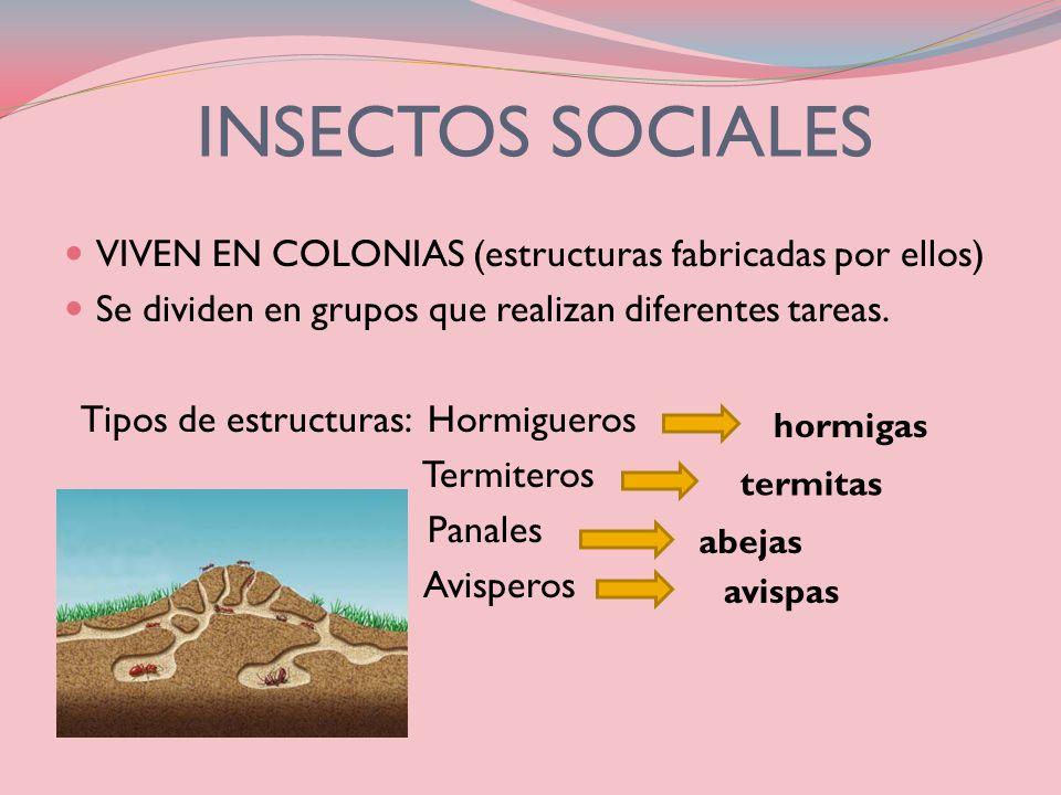 INSECTOS SOCIALES VIVEN EN COLONIAS (estructuras fabricadas por ellos)