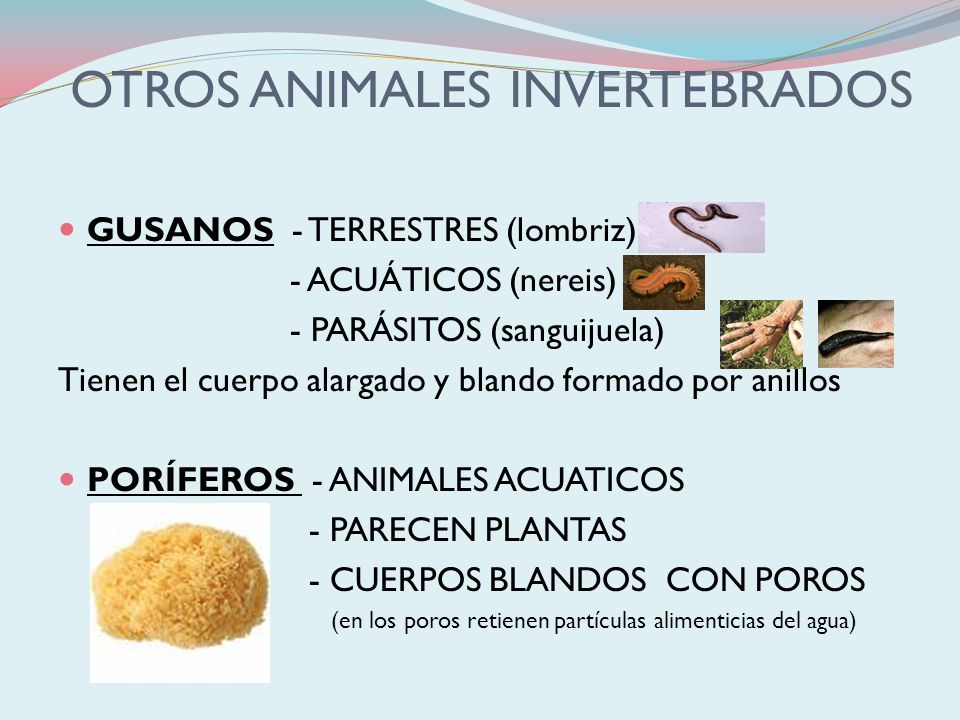 OTROS ANIMALES INVERTEBRADOS