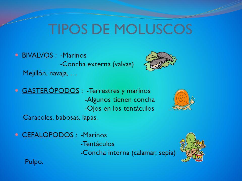 TIPOS DE MOLUSCOS BIVALVOS : -Marinos -Concha externa (valvas)