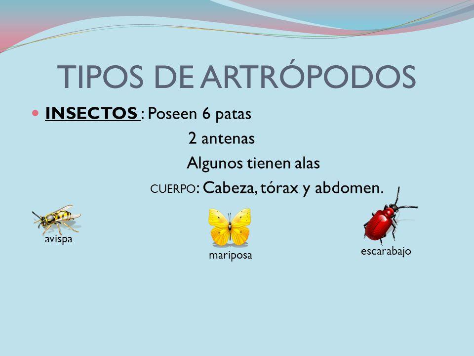 TIPOS DE ARTRÓPODOS INSECTOS : Poseen 6 patas 2 antenas
