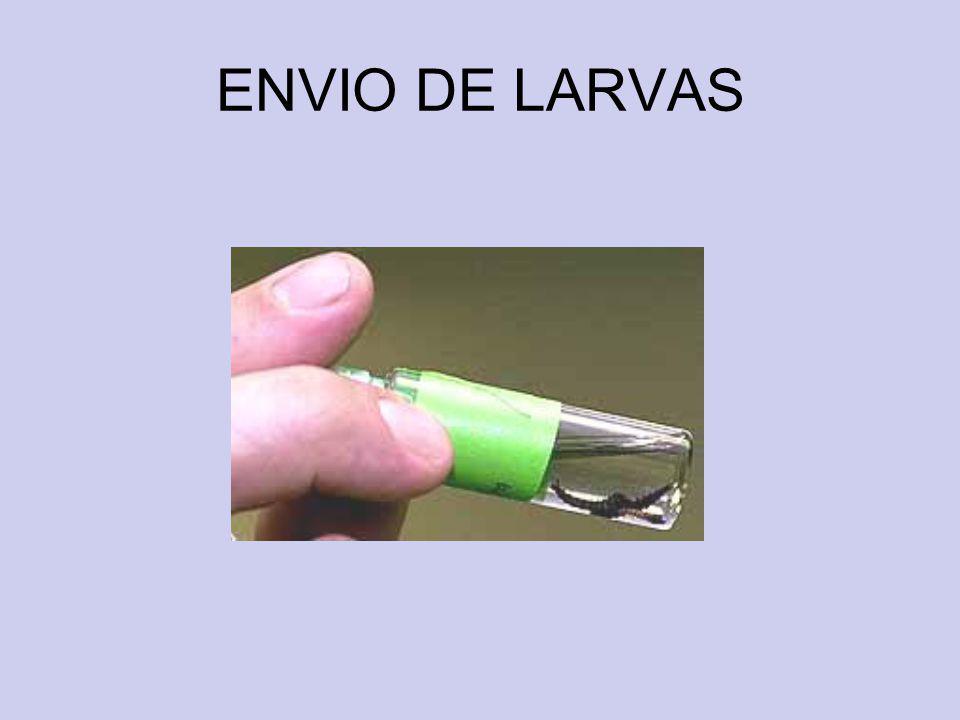 ENVIO DE LARVAS