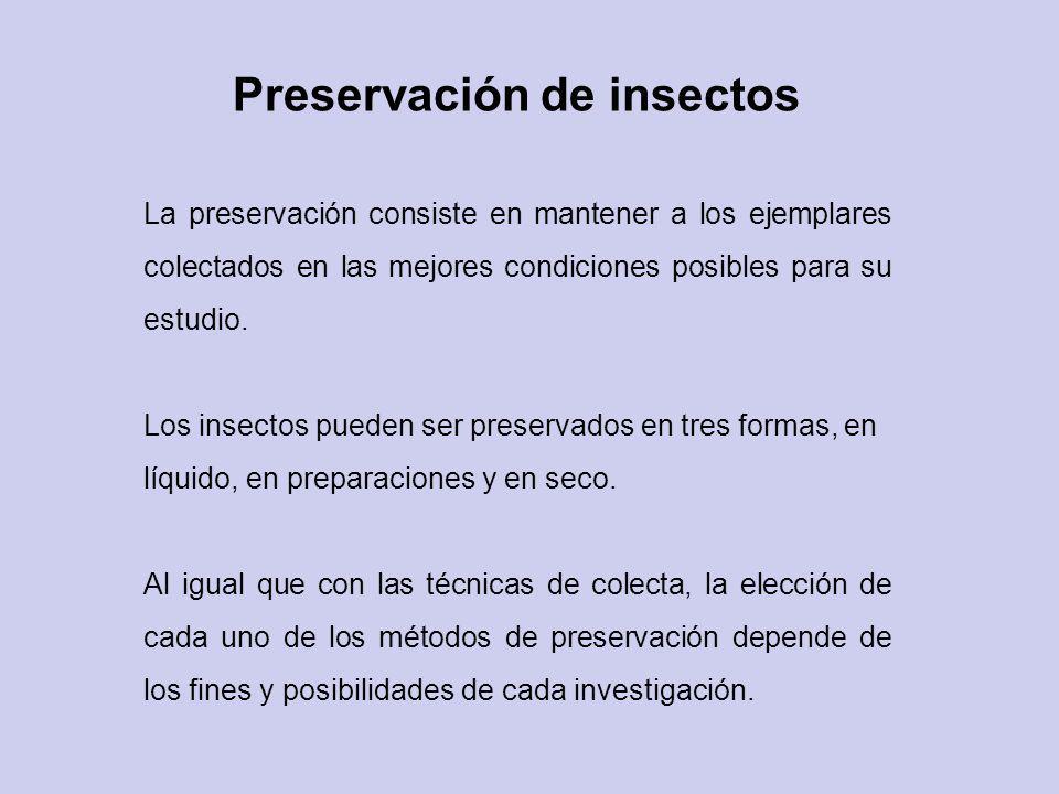 Preservación de insectos