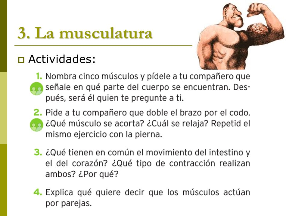 3. La musculatura Actividades: